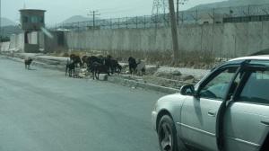 Kabul trip 6.29.14 023 (1)